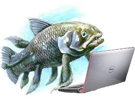 Quastenflosser @ Laptop